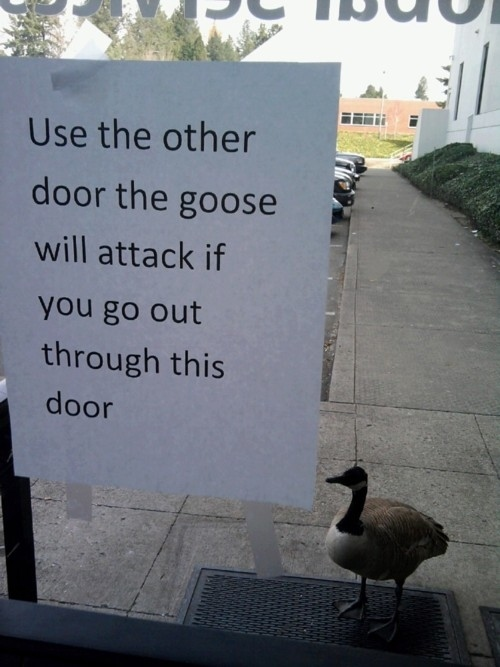 This totally misunderstood goose who got into one fight and now has to deal with the consequences: