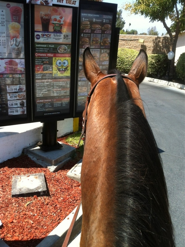 This horse that totally isn't sticking to her diet plan: