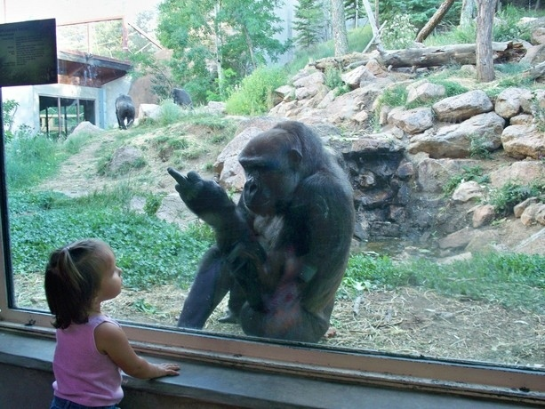 And this gorilla who thinks that a little glass is going to stop this child from getting her revenge: