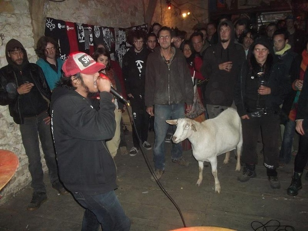 This goat that was forced to go see his friend's bad metal band: